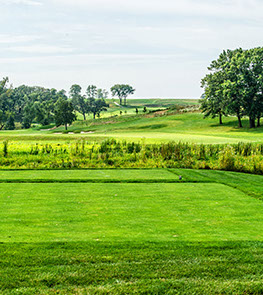 Hole 11 preview features dark greenery, natural landscaping and trees surrounding the green.